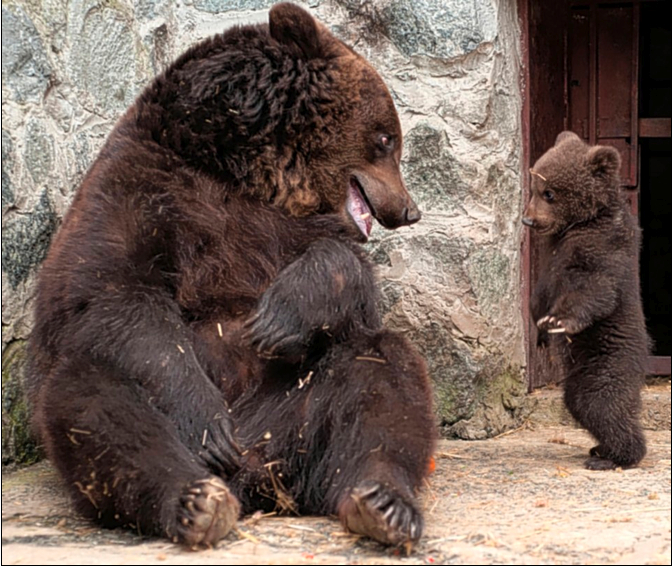 What A Mama Bear Can Teach Humans About Disciplining